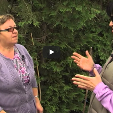 Kompostiranje z deževniki – Biobrazda