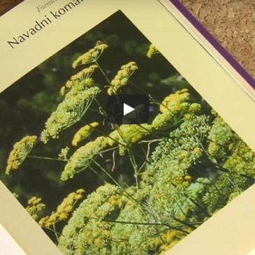Priporočamo: knjiga Zelišča